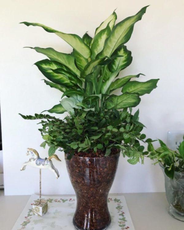 ベラボンに植えている植物