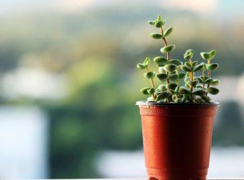 植木鉢を後ろから見た写真