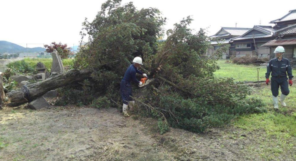 チェーンソーで木を切っている