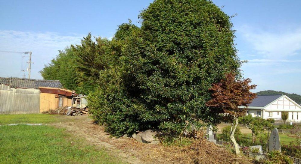 作業する前の木の状態